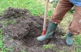 préparation plantation